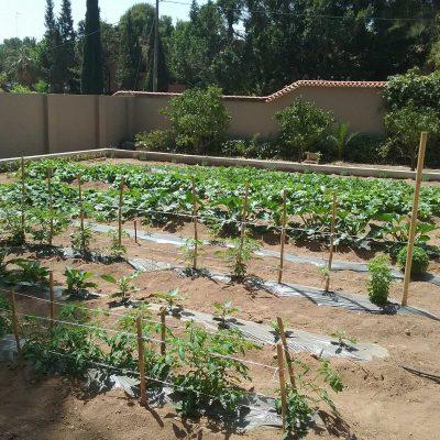 Jardín y Huerto Privado