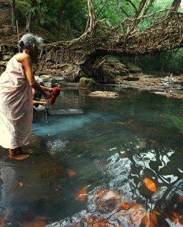 Los Puentes Vivientes de Meghalaya