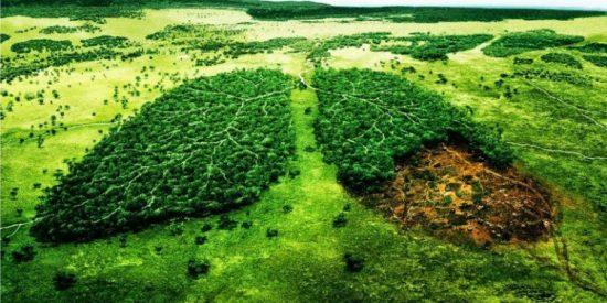 ¿Un planeta cada vez más árido y seco? Frenando la deforestación y desertización.
