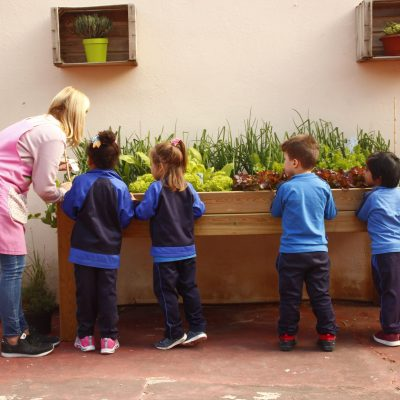 Jardín Plantas Aromáticas en Centro Escolar II fase