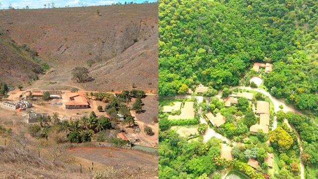 INSTITUTO TERRA : la destrucción de la Naturaleza se puede revertir